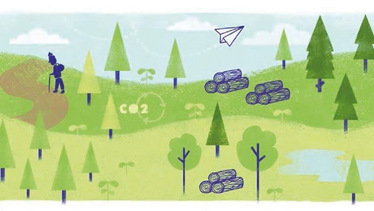 Nachhaltige Forstwirtschaft Two Sides Germany