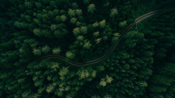 Wälder könnten zwei Drittel der menschengemachten CO2-Belastung ausgleichen