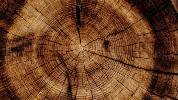 Biomasse als Alternative für fossile Rohstoffe