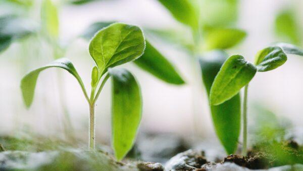 Neue Kampagne von Tetra Pak: Go Nature. Go Carton.