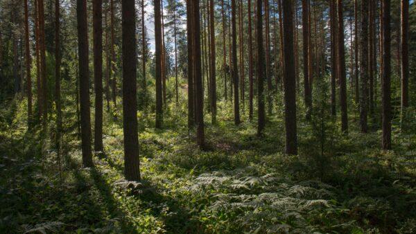 Zustand der Wälder in Europa 2020
