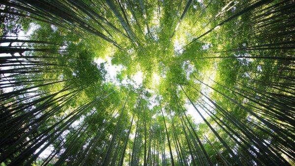 Waldnaturmanagement für die biologische Vielfalt