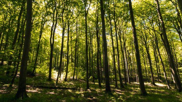 Gute Waldwirtschaft und die Gesellschaft – Wie hängt das zusammen?